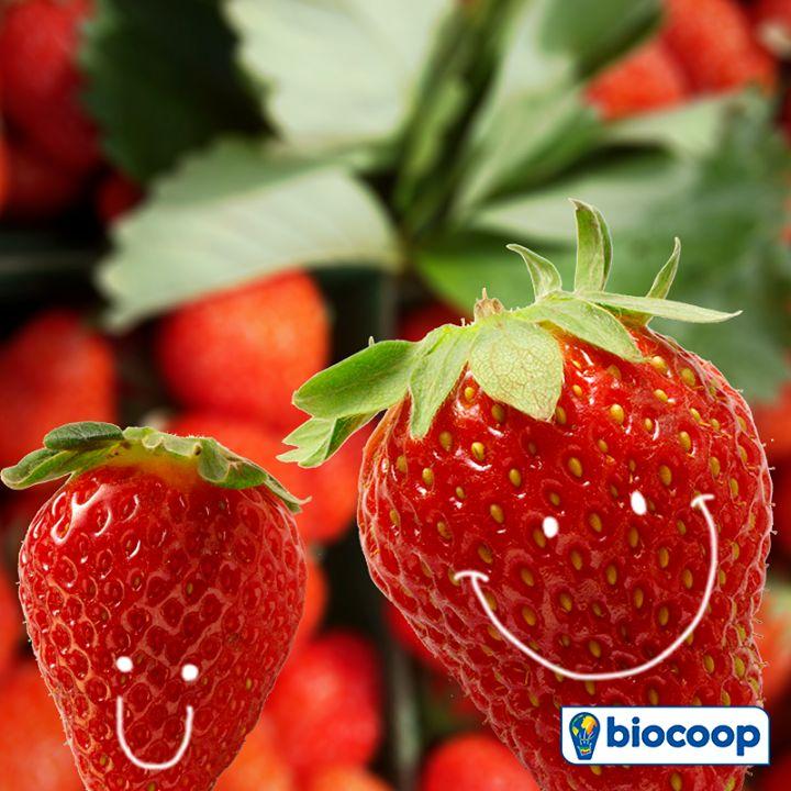 L'été approche ! Pour fêter ça, Biocoop fait de la fraise son fruit du mois de mai !