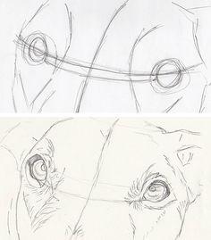 drawing dog eyes
