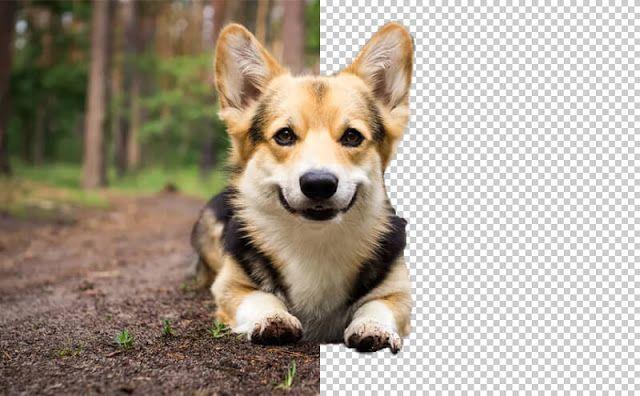 Bgeraser موقع جديد ورائع لإزالة الخلفية عن أي صورة بشكل سريع Bgeraser وهو موقع يق Remove Background From Image Background Eraser Make Background Transparent