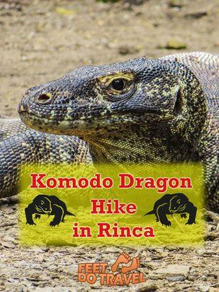Komodo Dragon Hike in Rinca, Indonesia