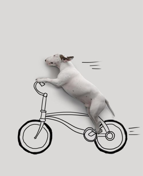 I want to ride my bicicle