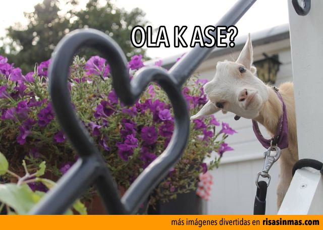 Ola K Ase?