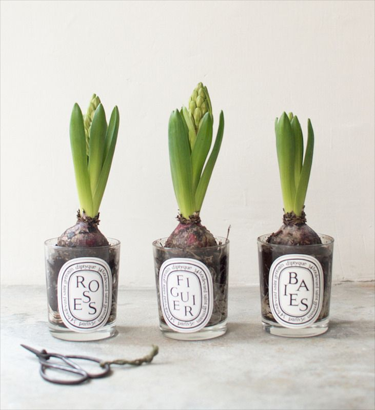 LOVE - Flowering Spring bulbs Via A Pair & a Spair! Such a cute use of the diptyque candles.