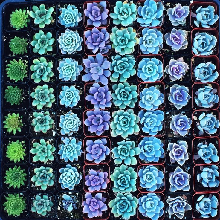 blue and green garden idea