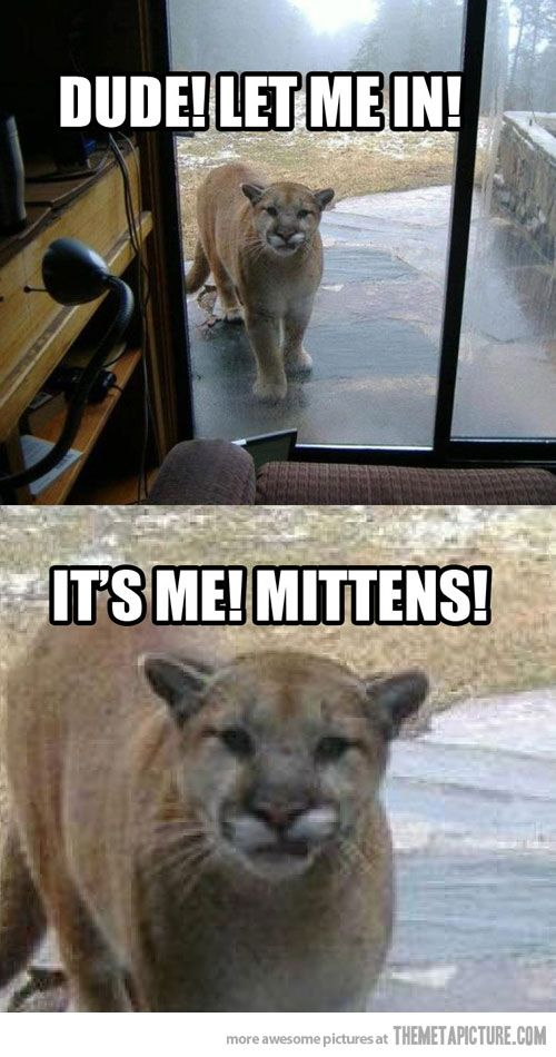 I'm not falling for that again: Laughing, The Doors, Funny Cat, Mittens, Funny Stuff, Mountain Lion, So Funny, Cat Names, Animal