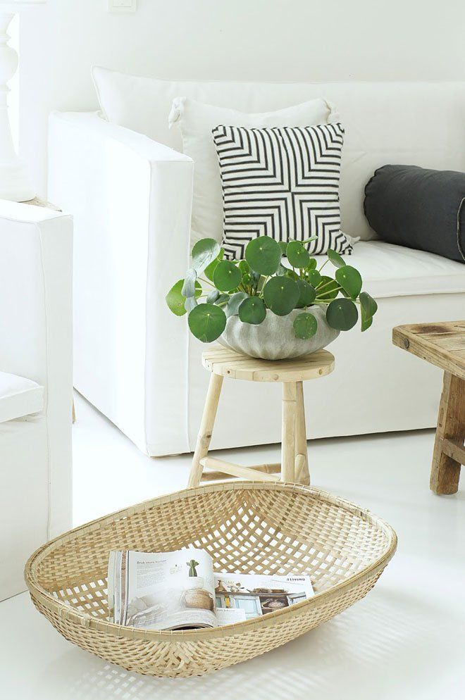 Pilea Peperomioides http://www.missmoss.co.za/2013/11/26/chinese-money-plant/  photo by Lisettes Perler