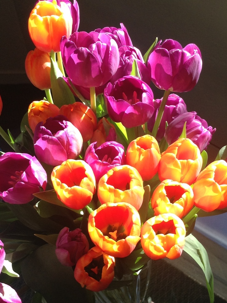 tulips from safeway blossoms pinterest tulip. Black Bedroom Furniture Sets. Home Design Ideas