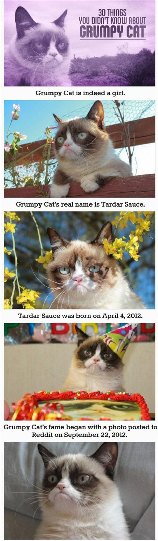 Dump A Day 30 Things You Probably Didn't Know About Grumpy Cat