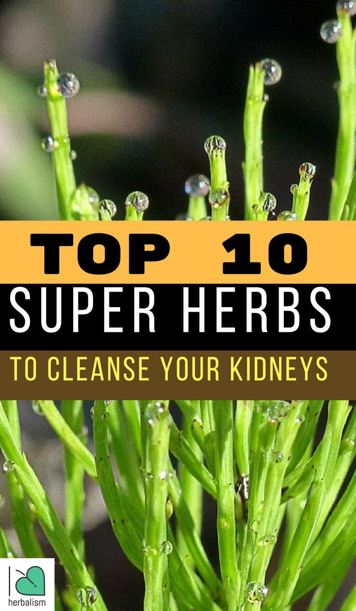 Top 10 Super Herbs to Cleanse Your Kidneys | Herbalism ...