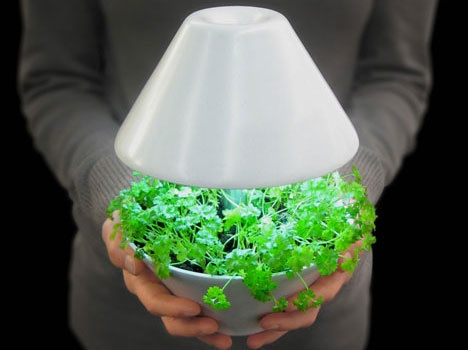 light pot for plants