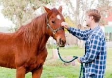 El Síndrome de Down es un desorden genético provocado por la triplicación del cromosoma 21, y es por esto que la UNESCO eligió la fecha de hoy, día 21 del mes 3, para conmemorar el Día Internacional del Síndrome de Down. Los animales suponen un refuerzo positivo para niños y adultos afectados por este síndrome, y también para personas ...  http://veterinaria-blog.es/campus-training/caballos/mascota-terapeuta/