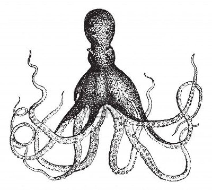 Octopus, Jahrgang gravierte Darstellung. Wörterbuch der Wörter und Dinge - Larive und Fleury - 1895. Stockfoto - 13766724