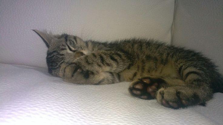 il mio micio Perseo!