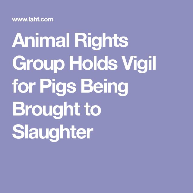 Animal Rights Group Holds Vigil for Pigs Being Brought to Slaughter