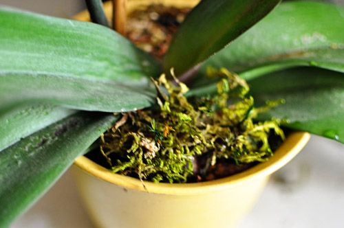 how to re-pot orchids