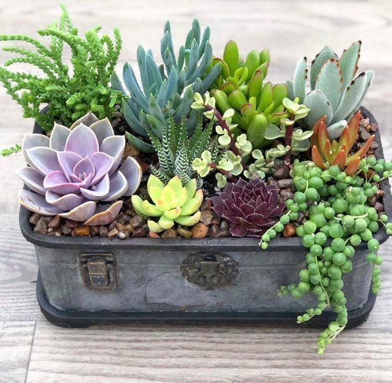 Succulent Arrangement Succulent Plants Rustic Trunk Etsy Pot A