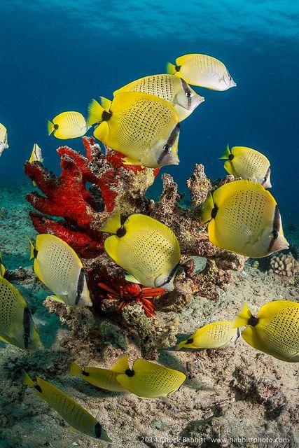 . #putdownyourphone #nature #Dream_Underwater_World #water #beauty #Ocean #ocean_life #sea_life