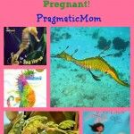 Seahorse Facts: Seahorse Fathers Do Get Pregnant!