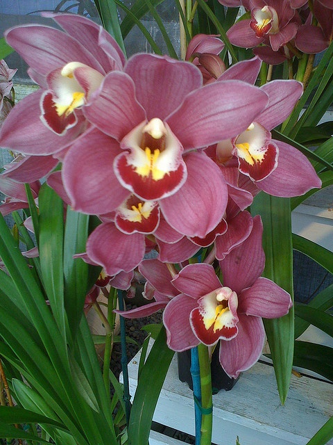 Thanks cal pacific orchid farm for donating a beautiful Christmas orchid arrangements