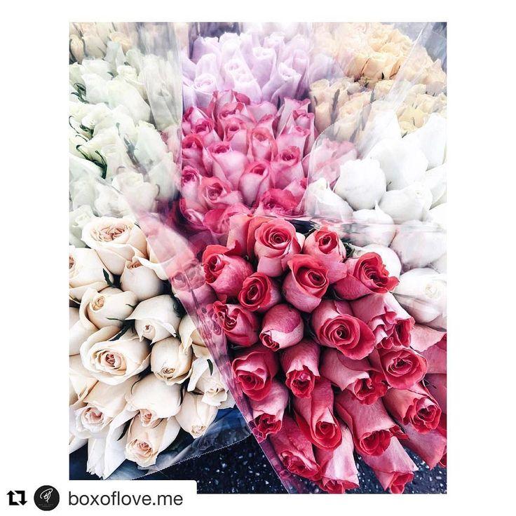 💕 The infinite beauty of a rose is priceless!   ( Frumusețea infinită a unui trandafir este de nepretuit ! ) 💕 #Rose #Bouquet #Love #Luxury #Gift #Beautiful #Birthday #Trandafir #Buchet #Dragoste #Lux #Cadou #Frumos #Aniversare #Box #Flower #Brand #Sexy #2016 #New #Art  #Cutie #Flori #Firma #2017 #Nou #Gentleman #Iubita