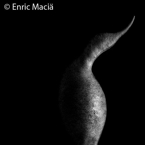 © Enric Maciä