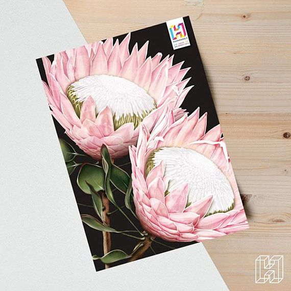 Red Protea Flower Bunch Isolated On A Black Background Protea Flower Protea Art Bunch Of Flowers