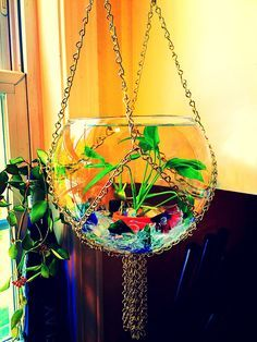 $78.00 on etsy. Handmade Macrame Chain Hanging Fish Bowl, Macrame, Hanging Fish Bowl, Mid Century Decor, Mid Century Modern Decor, Mid Century, Kitchen Decor, Bedroom Decor, Beta Fish, Goldfish, Hanging Beta Fish Bowl, Hanging Fish Bowl, Planter Hanger, Terrarium, Goldfish Bowl, Air Plants, Macrame Plant Hanger, Kitchen Sink Window, Peace Lily Plant, Bubble Ball Vase, Boho Decor, Hippie Decor, Plant Terrarium, Sea Glass, DIY S-Hook Chain Project, Pet Supplies, Fish Tank, Fish Bowl, iwana1…