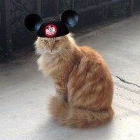 The Cats of Disneyland...adorbs!