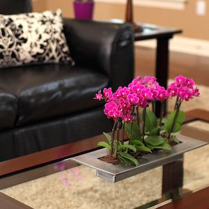5 reasons to buy mini orchids