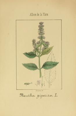 3 - Album de la flora médico-farmacéutica é industrial, indígena y exótica, - Biodiversity Heritage Library