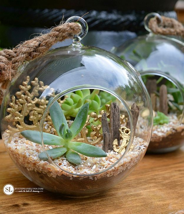 Want the best terrarium plants for your homestead? If you're looking to brighten up your home with a little greenery, then these 17 terrarium plants will give you a foundation of ideas to work from.