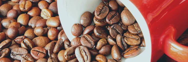 11 koffie feiten die je nog niet wist