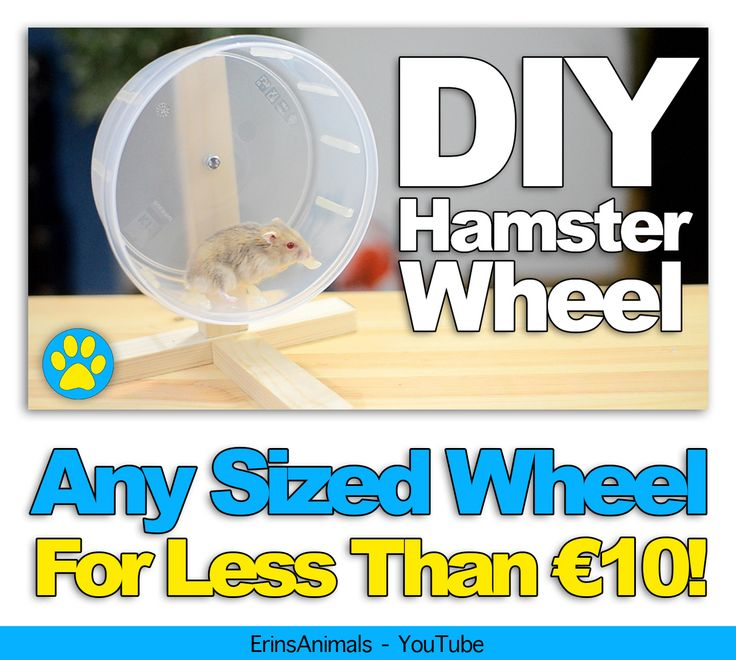 DIY hamster wheel also suitable for mice and other small pets
