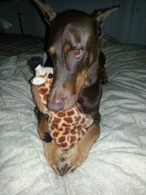 I Has A Hotdog - Page 6 - Loldogs n Cute Puppies - funny dog pictures - Cheezburger