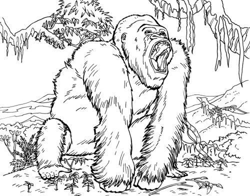 Cool Coloring Pages Of Animals Animal Gorilla Book Illustrator Manga Style Page Large