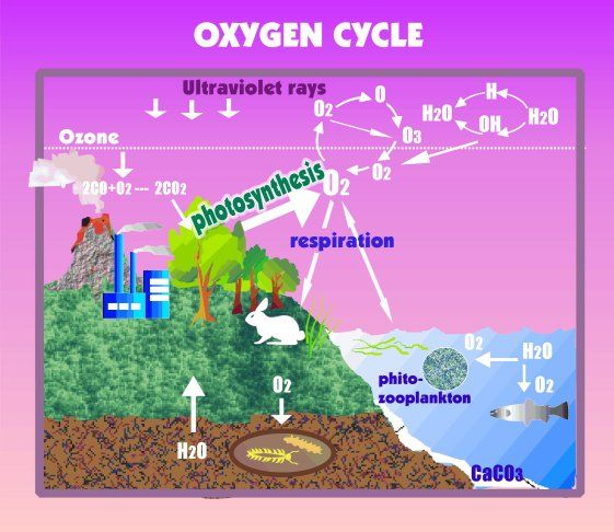 Oxygen Cycle - Lessons - Tes Teach