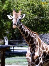 Reid Park Zoo: Tucson Favorites, Favorite Places, Reid Park, Travel Arizona, Zoos, Travel Usa
