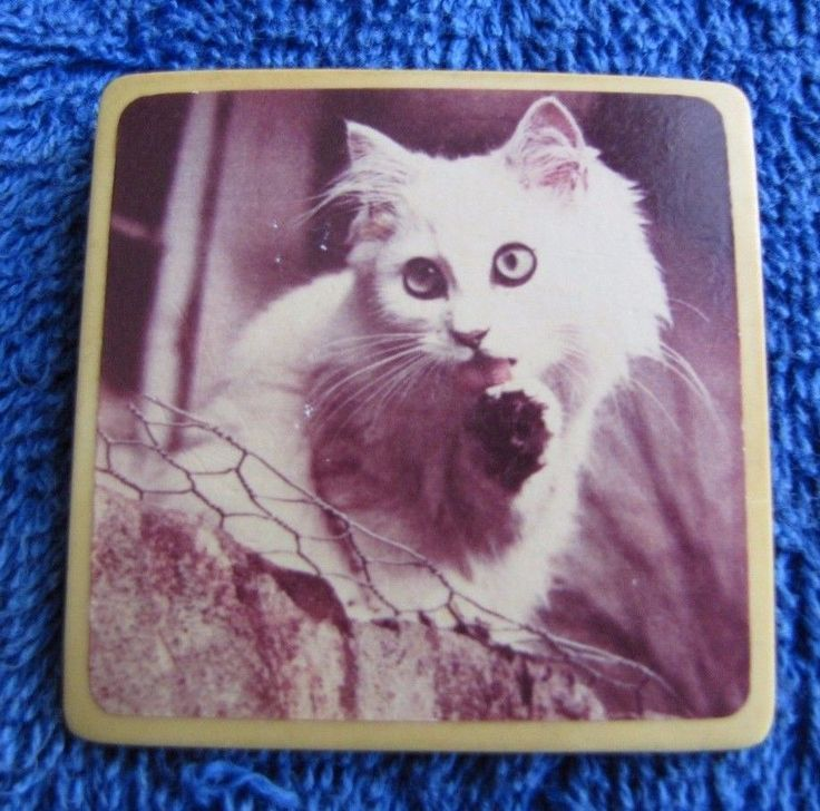 Vintage Soviet USSR pin badge cat animals Fotomix collectible ц1р 1 rub