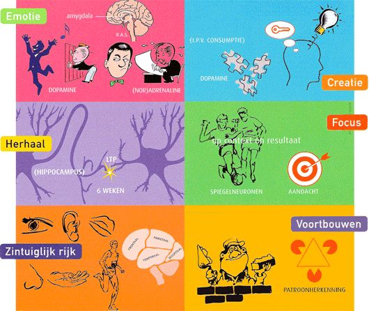 Breinprincipes #BreinDidactiek #hersenen #leren
