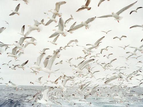 Corey Arnold The Ocean, At The Beach, Coastal Style, Sea, Beautiful Birds, The Waves, Anna Maria Islands, Happy Weekend, Beach Life