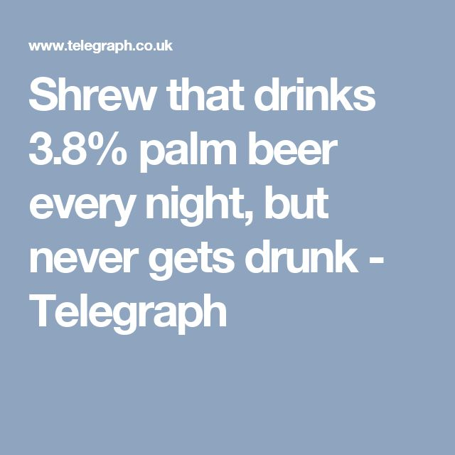Shrew that drinks 3.8% palm beer every night, but never gets drunk - Telegraph