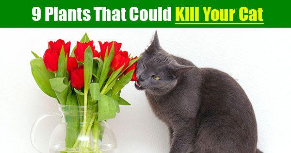 50 best cat care images on pinterest