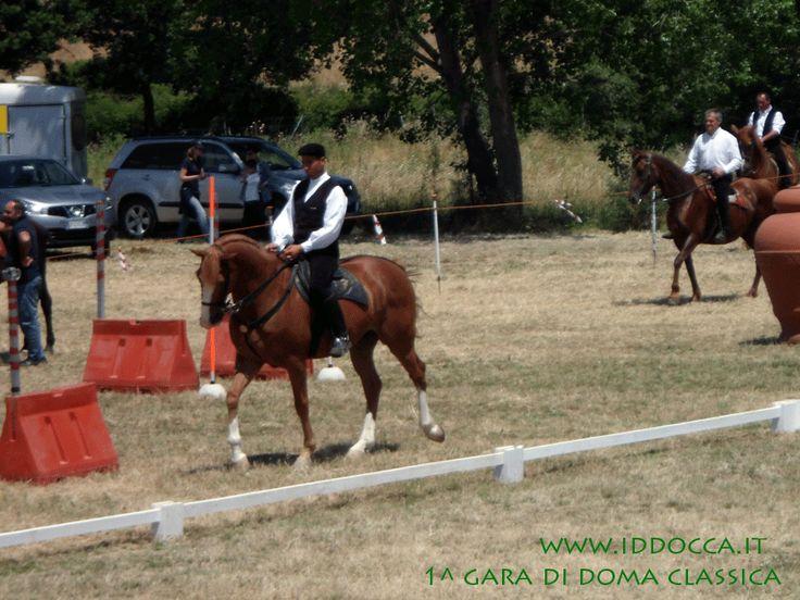 Nurallao 30 Giugno 2013: Fantino durante la gara  (Nurallao June 30, 2013: Jockey during the race)