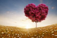 Love heart tree fields