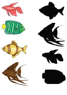 retrouver l'ombre des poissons