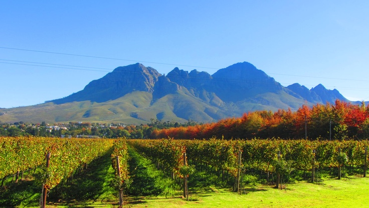 Lourensford Estate #SouthAfrica #autumn #wine