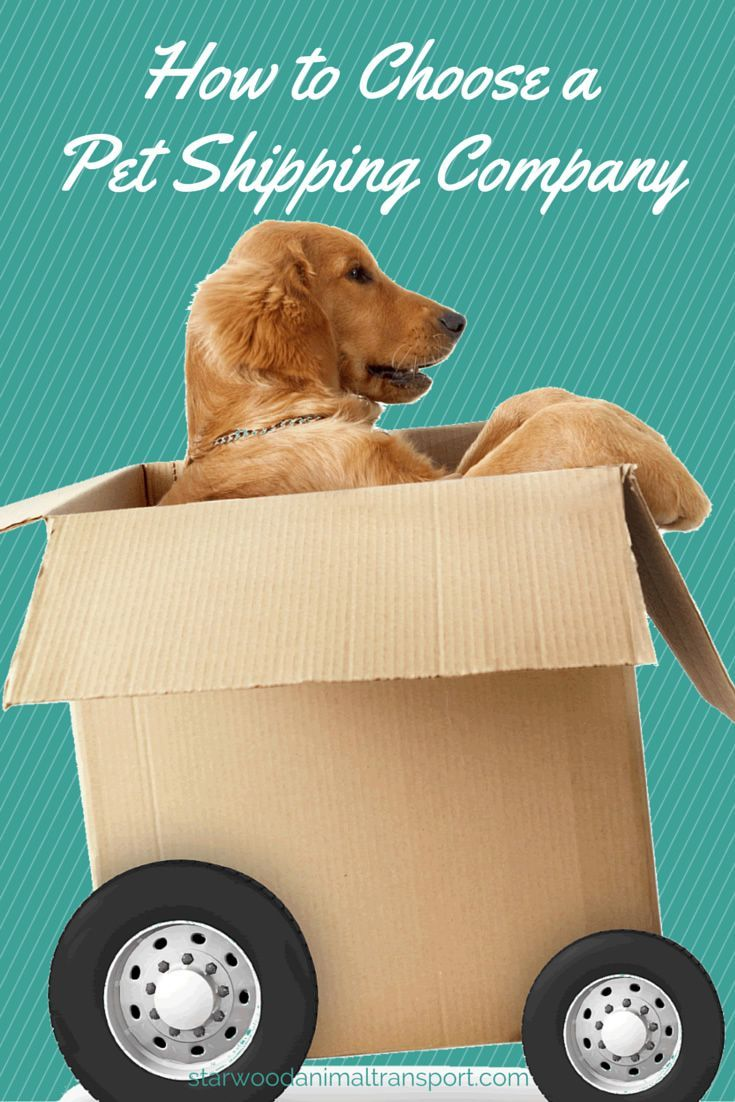 How to choose a pet shipping company.