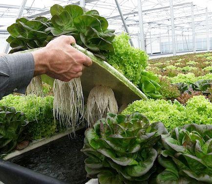 Las 25 mejores ideas sobre cultivos hidroponicos en for Plantaciones verticales
