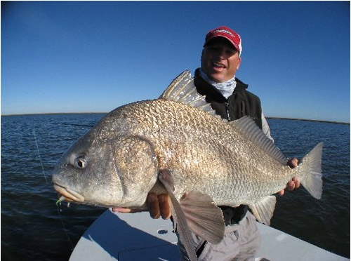 12 best images about black drum on pinterest drums fly for What is the best fish to eat