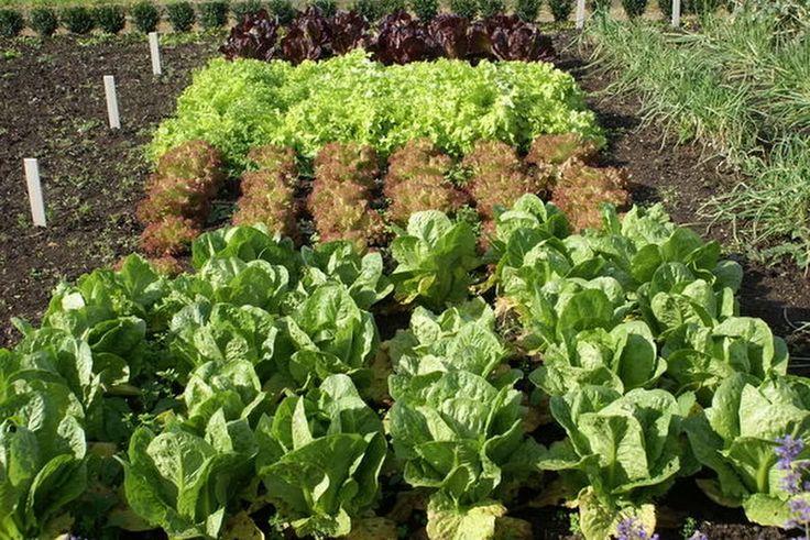 Какую зелень можно посадить в сентябре - Perchinka63